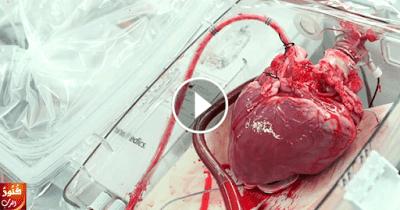 شاهد بالفيديو كيف ينبض القلب داخل الجسم... سبحان الله !!