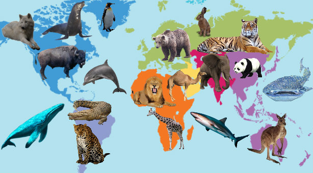 animal jam expert animals