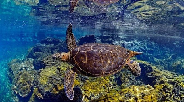 The beauty of Underwater Galapagos
