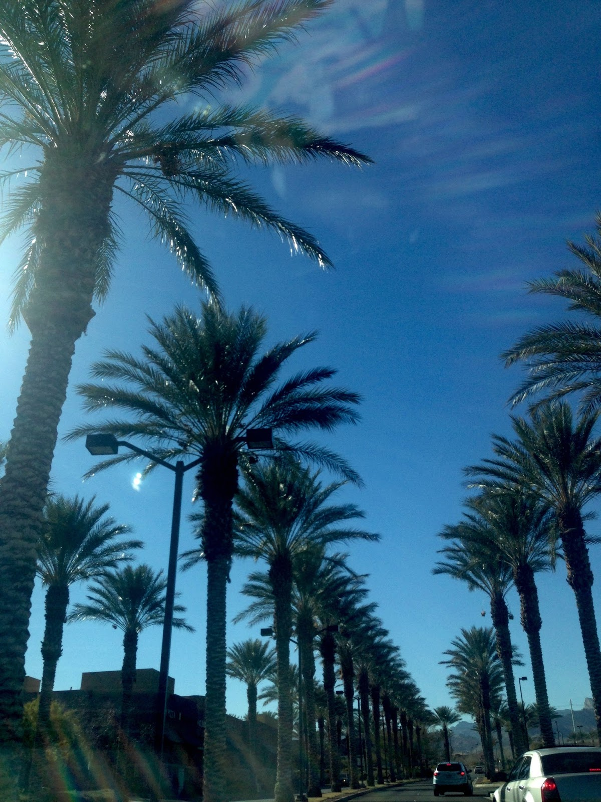 Las Vegas Summerlin Majestic Palm Trees in the desert