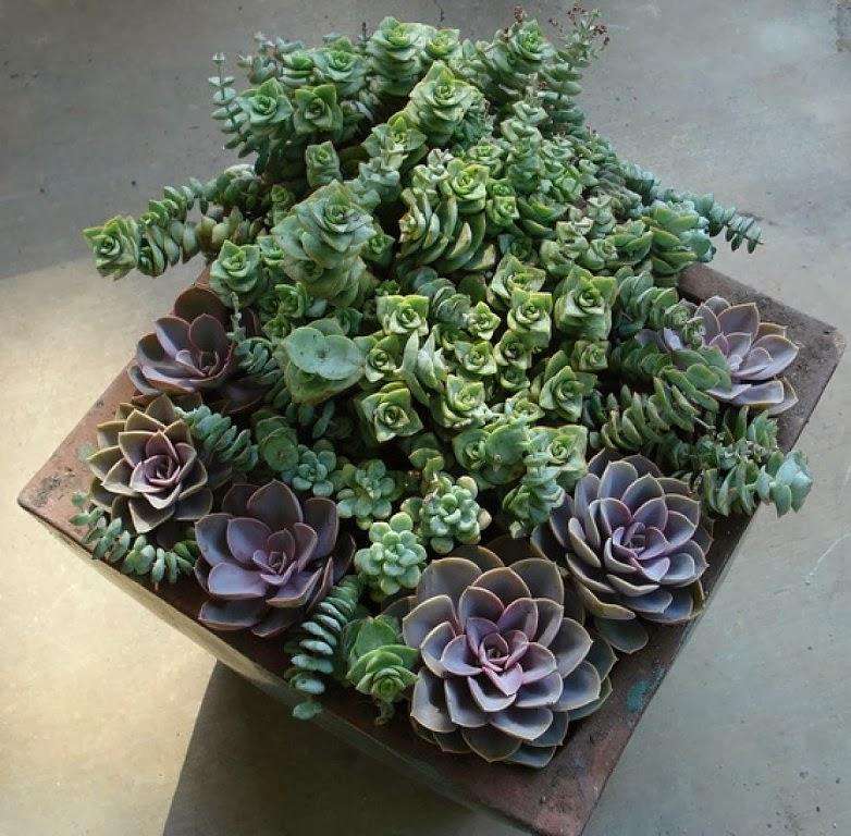 Decoraconmar a plantas de interior y otras crasas o - Plantas que aguanten el sol ...