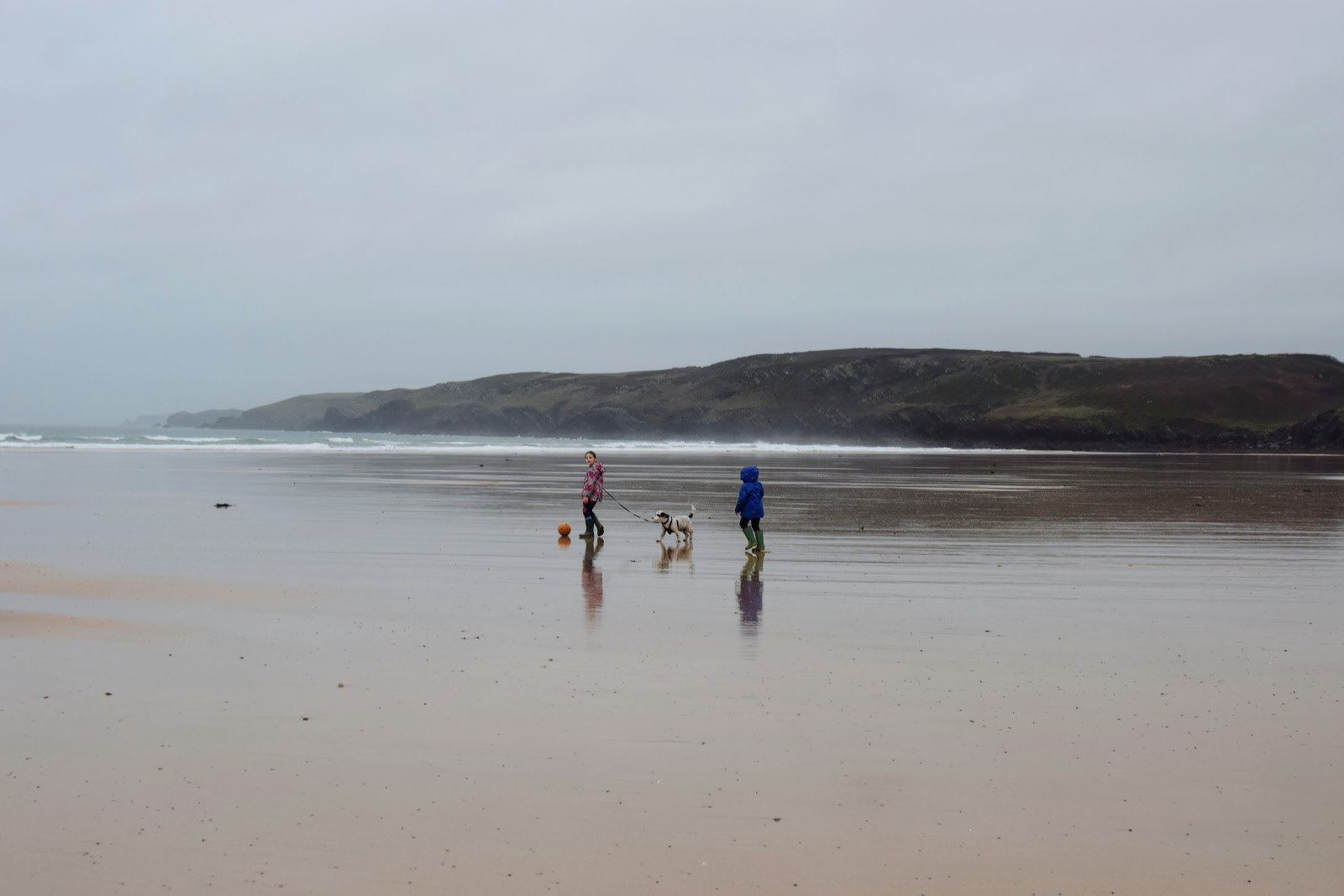 , Dodge the Dog at Freshwater West (Dobby's Shell Cottage)