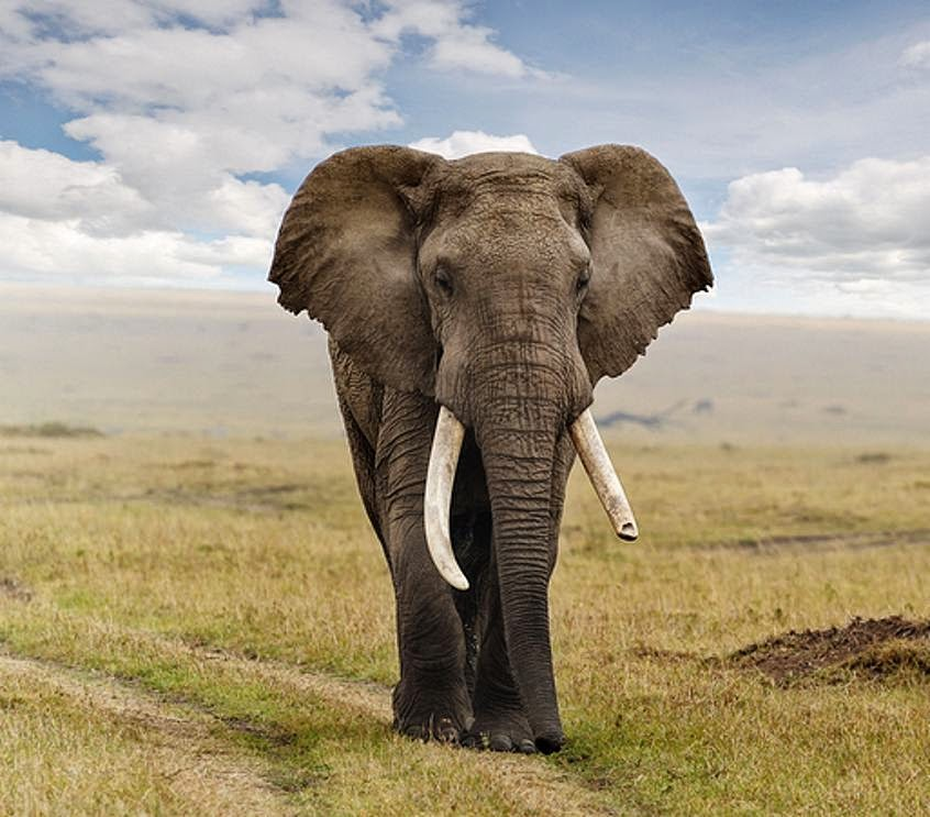 Gajah pun Memakai Sepatu Dengan Kaki Tangguh ~ Teknik Islam