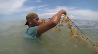rumput laut karimunjawa