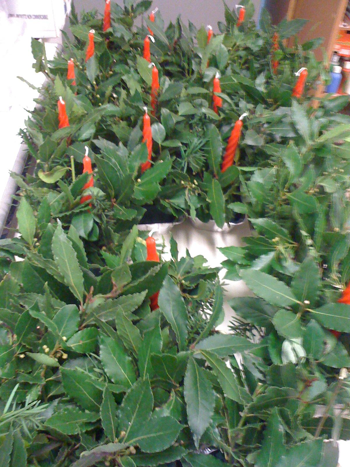 Classe a colori candele di natale con foglie - Scene di natale a colori ...