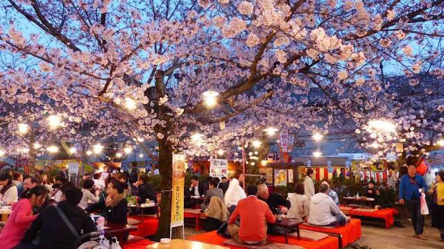 Ngắm hoa anh đào – Lễ hội Hanami (15/3 đến 30/4)