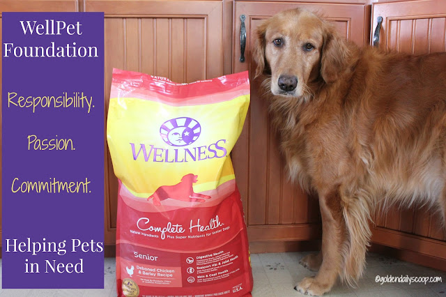 Wellness Pet's WellPet Foundation