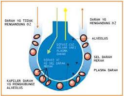 Cara Melancarkan Pertukaran Oksigen