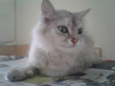 Bikin Makanan Kucing Buatan Sendiri Mudah Dan Murah ? Begini Resepnya