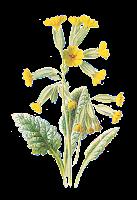 flower free wildflower botanical artwork digital clip art image illustration