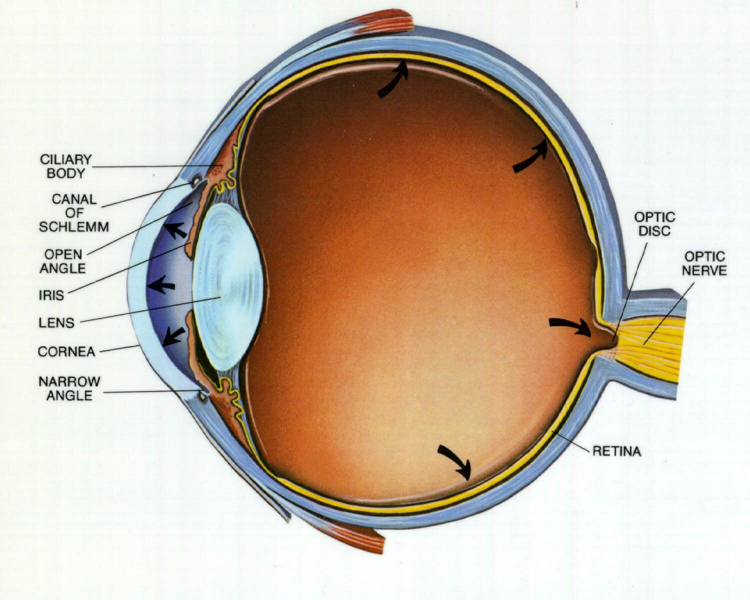 Advanced Stages Glaucoma