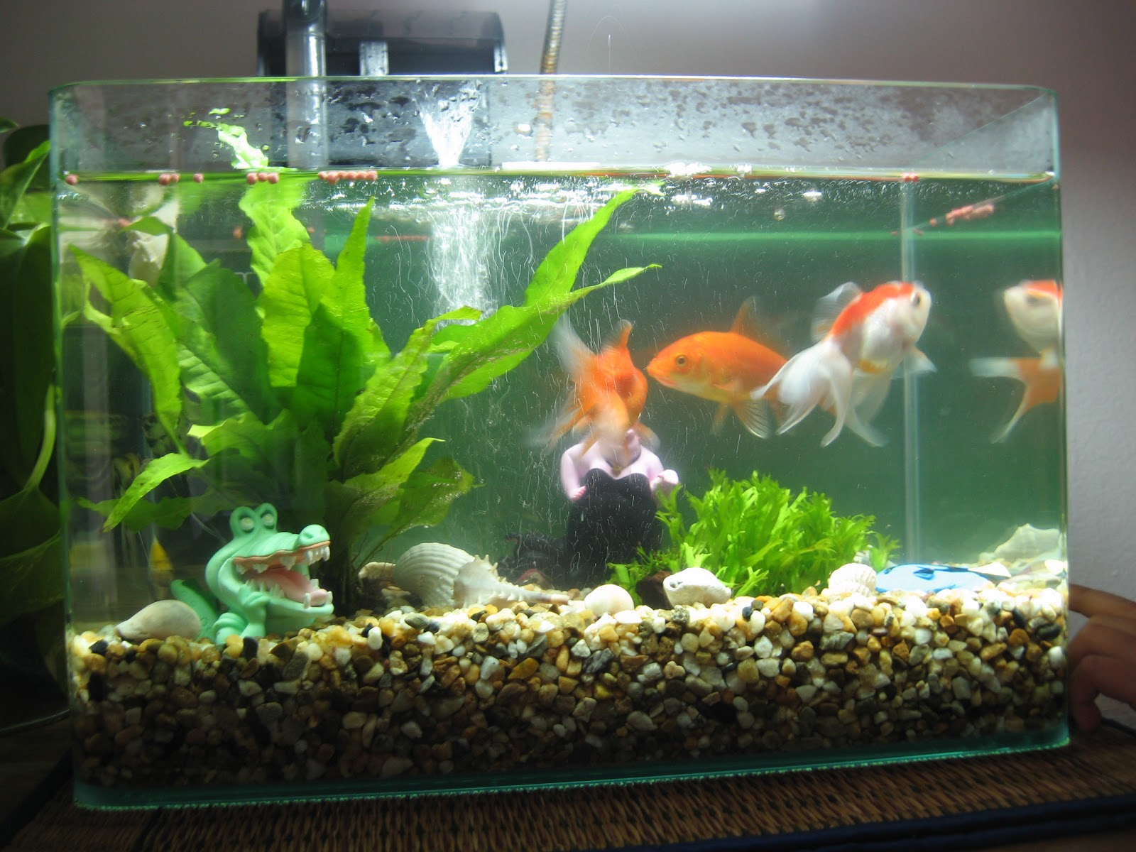 Fish Tank | Motorcycle Review and Galleries