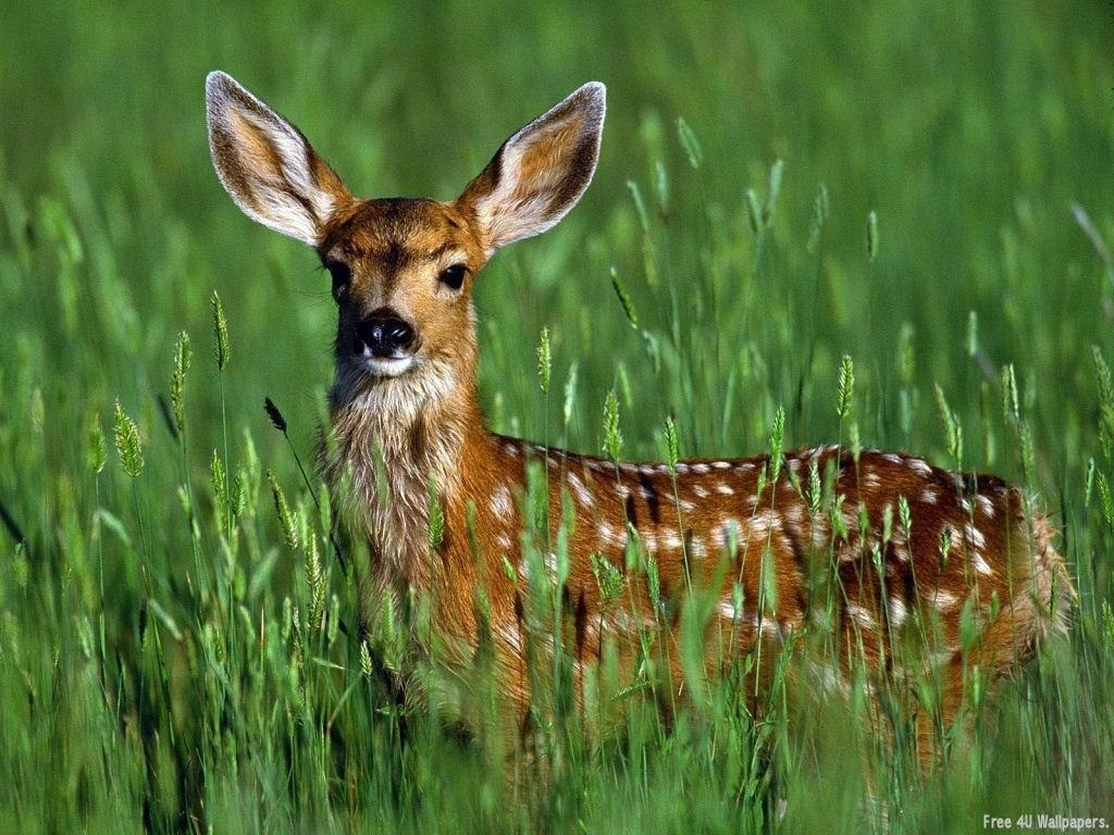 All Animals Wallpaper: Download Free Wallpapers: Wild Animals Wallpapers