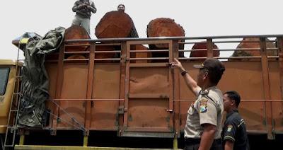 Angkut Kayu Bodong, Truk dan Sopir Diamankan