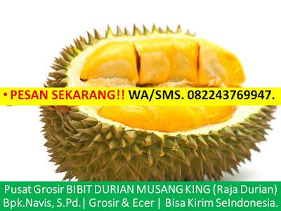 Jual Bibit Durian Musang King Di Bandung Wa 08 224376 9947