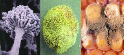 Tanda-tanda dan Jenis Kerusakan Bahan Makanan | SainsDucation