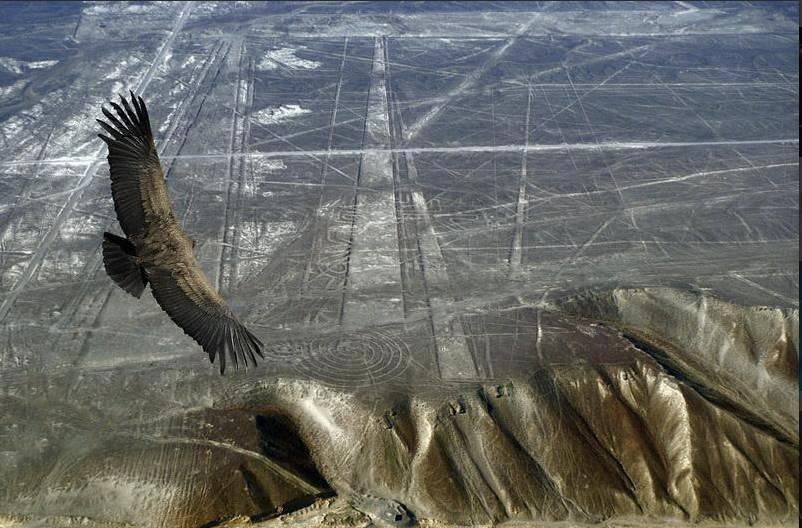 Las impresionantes Líneas de Palpa, en Perú
