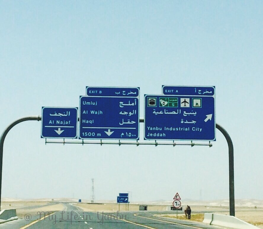 Drive to Umluj in Tabuk Province