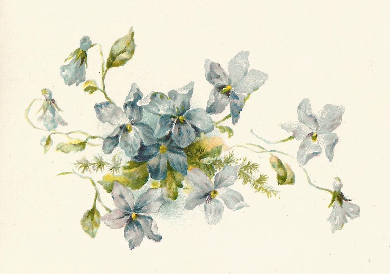 Vintage Flower Drawings 69
