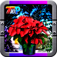 Top10NewGames Find The New Year Poinsettia Walkthrough