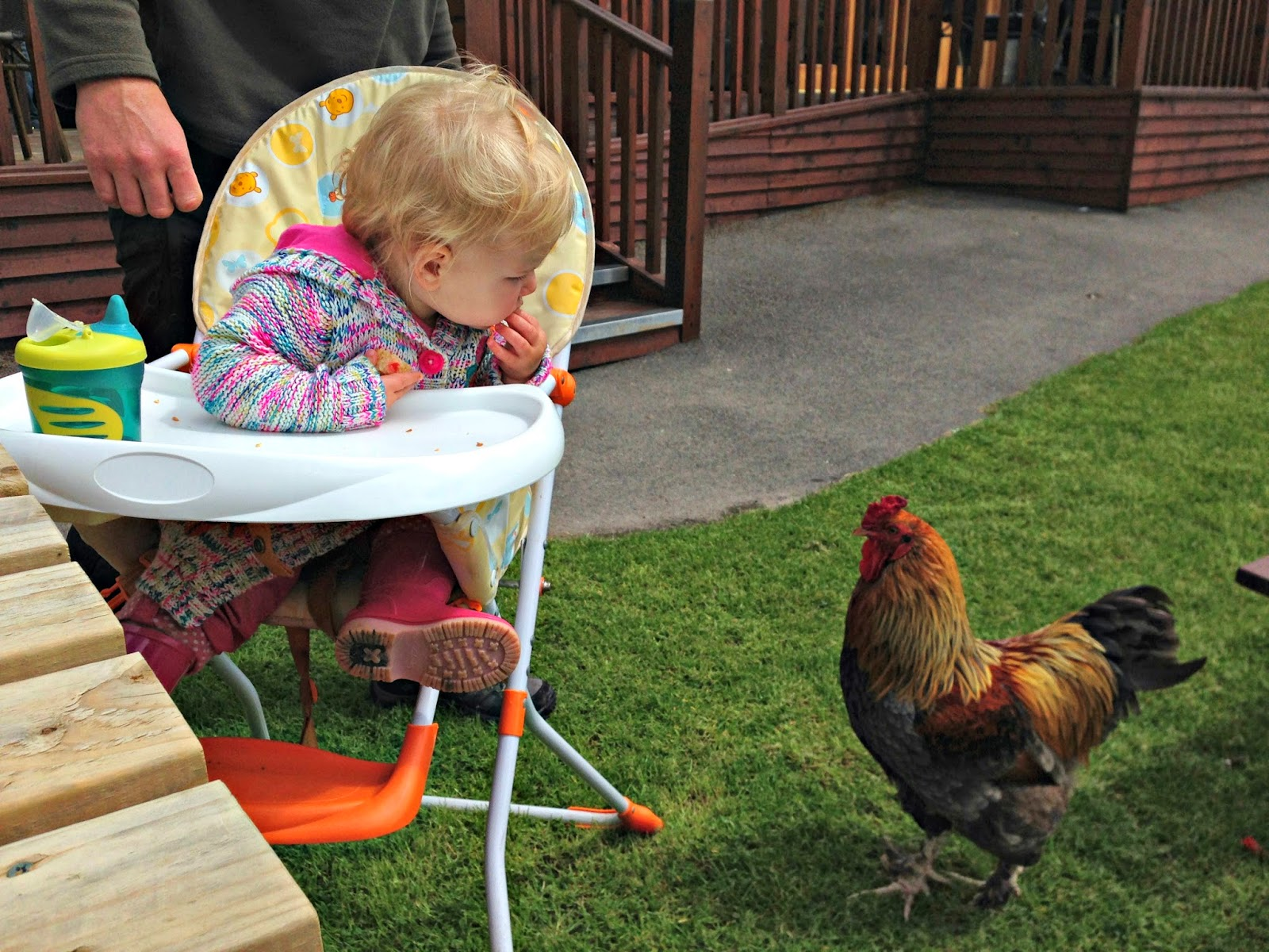 Tin Box Tot and a chicken