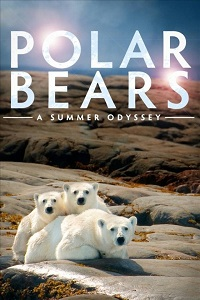 Watch Polar Bears: A Summer Odyssey Online Free in HD