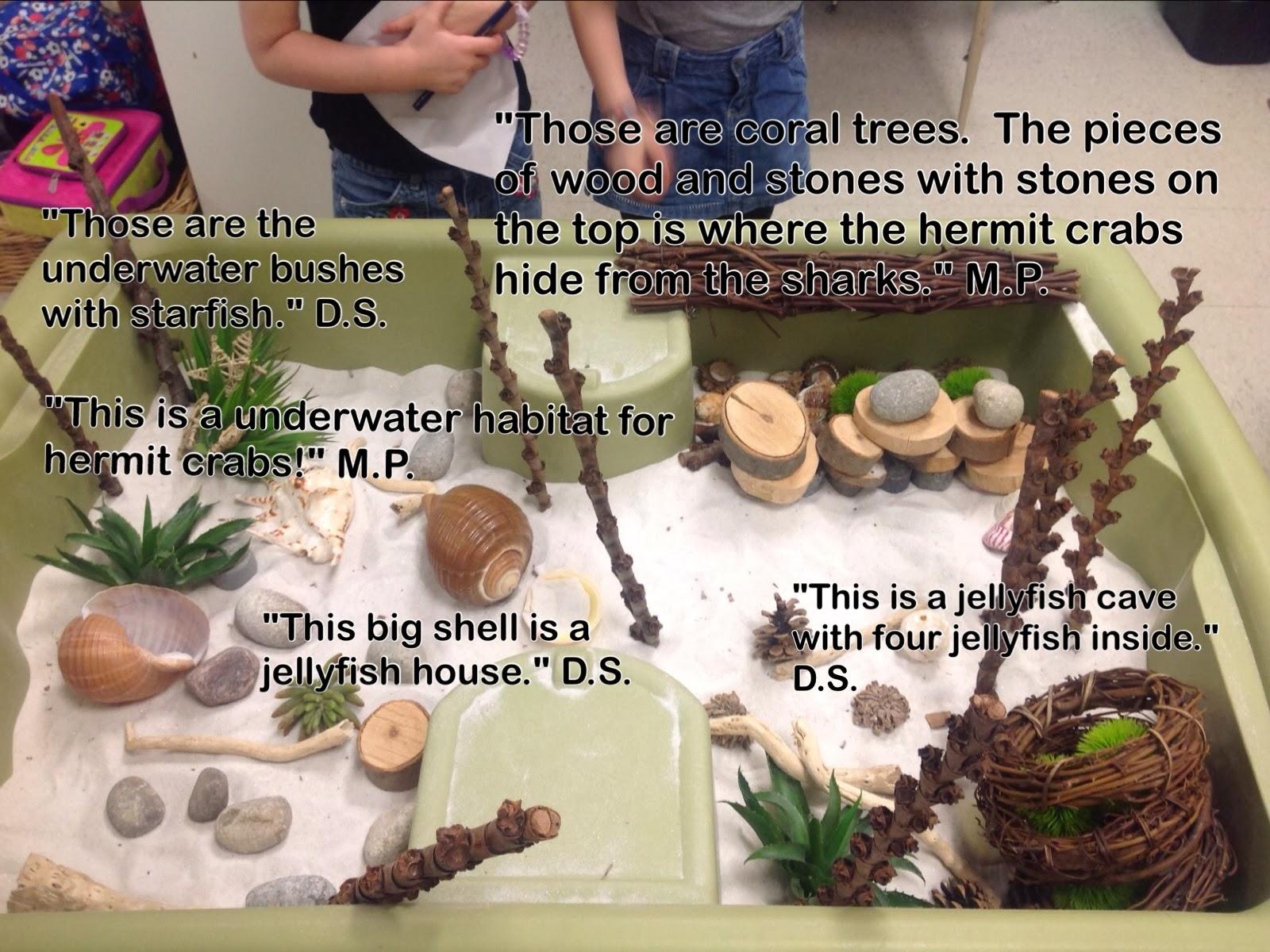 Wonders In Kindergarten One Of The Hermit Crabs Changed