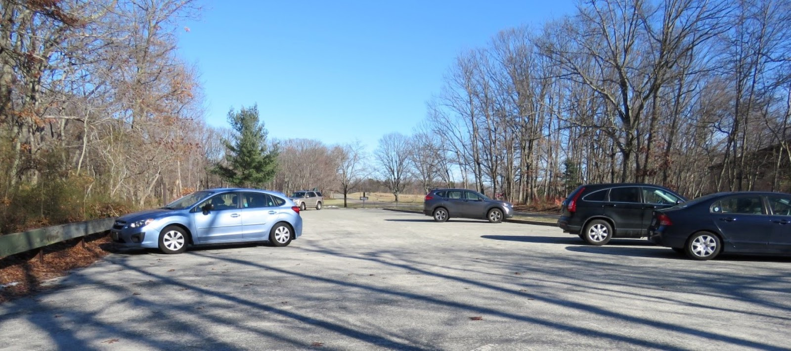 Gone Hikin': Cheesequake State Park, NJ - Yellow and Blue