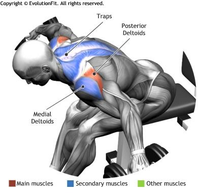 Shoulder Training Tips & Building Boulder Shoulders Strong and Healthy Shoulders