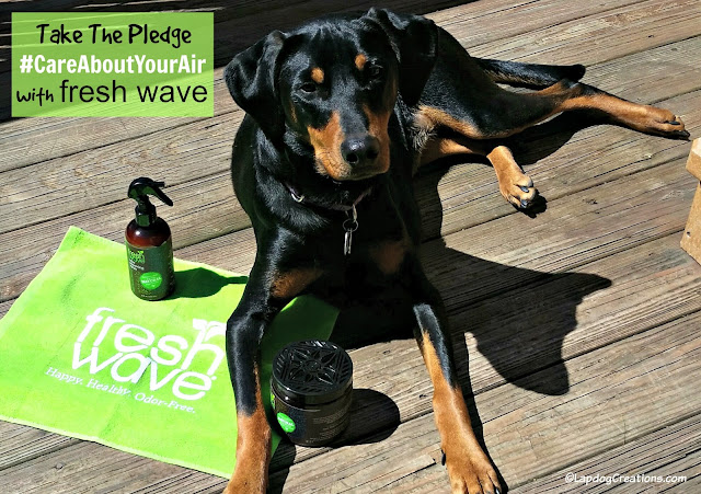 doberman mix rescue dog fresh wave natural cleaning