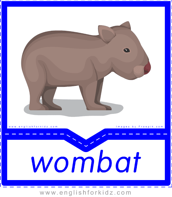 Wombat - printable Australian animals flashcards for English learners
