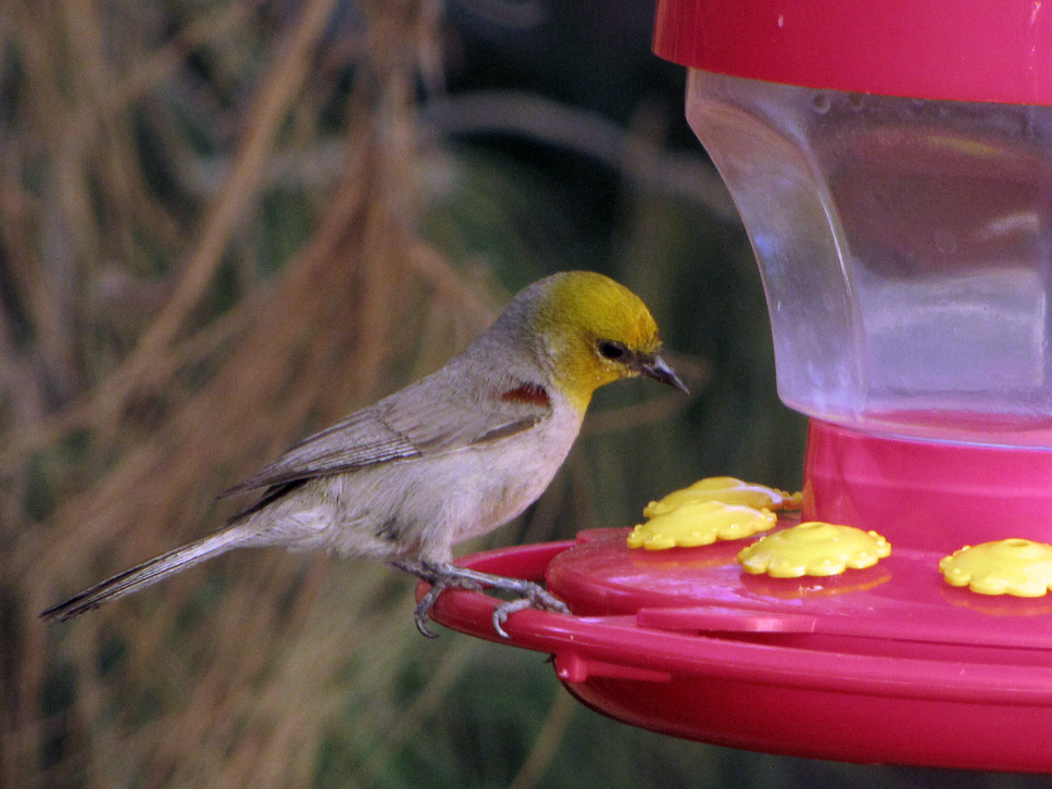 Usa Payday Loans >> Pretty Birds | Desert Colors