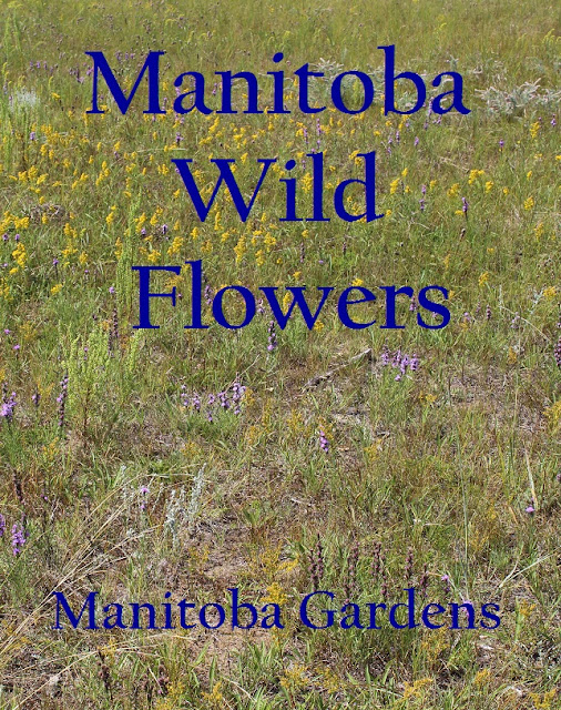 Wild flowers on our Manitoba acreage