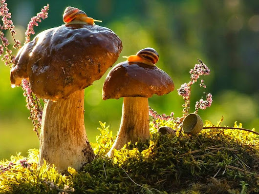 3 Interesting Facts on Fungi and Forests