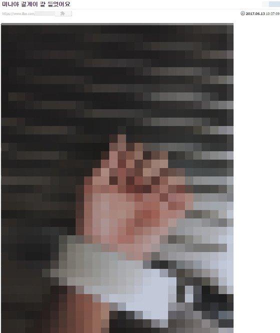 Znalezione obrazy dla zapytania mina twice ilbe