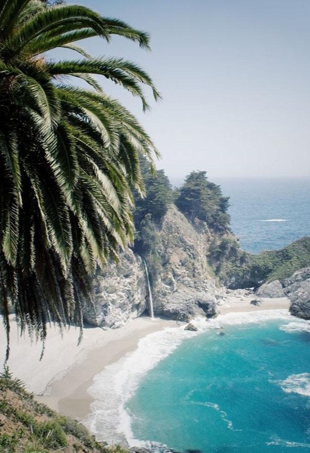 palms, island, beach