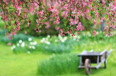 Một mùa Xuân nữa lại về