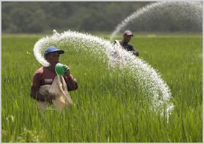 Alasan Para Petani Memilih Pupuk Kimia