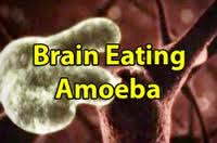 Brain Eating Amoeba Naegleria fowleri Habitat, Symptoms, Fatality.