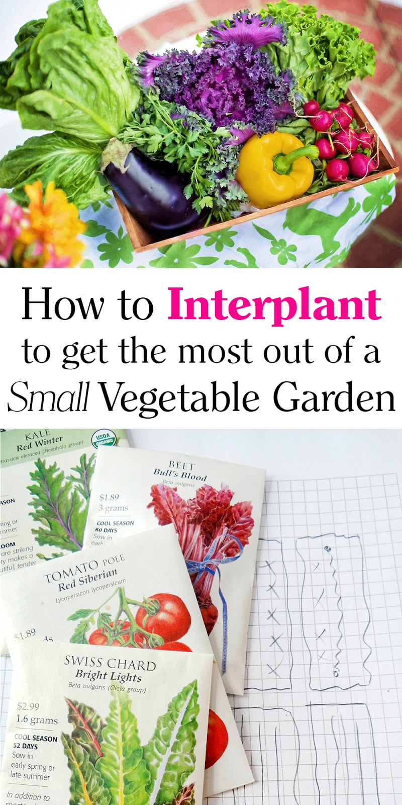 Southern Mom Loves: How to Interplant to Get the Most out of a Small ...