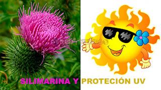 Silimarina y protección UV