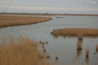 Vista de la llacuna