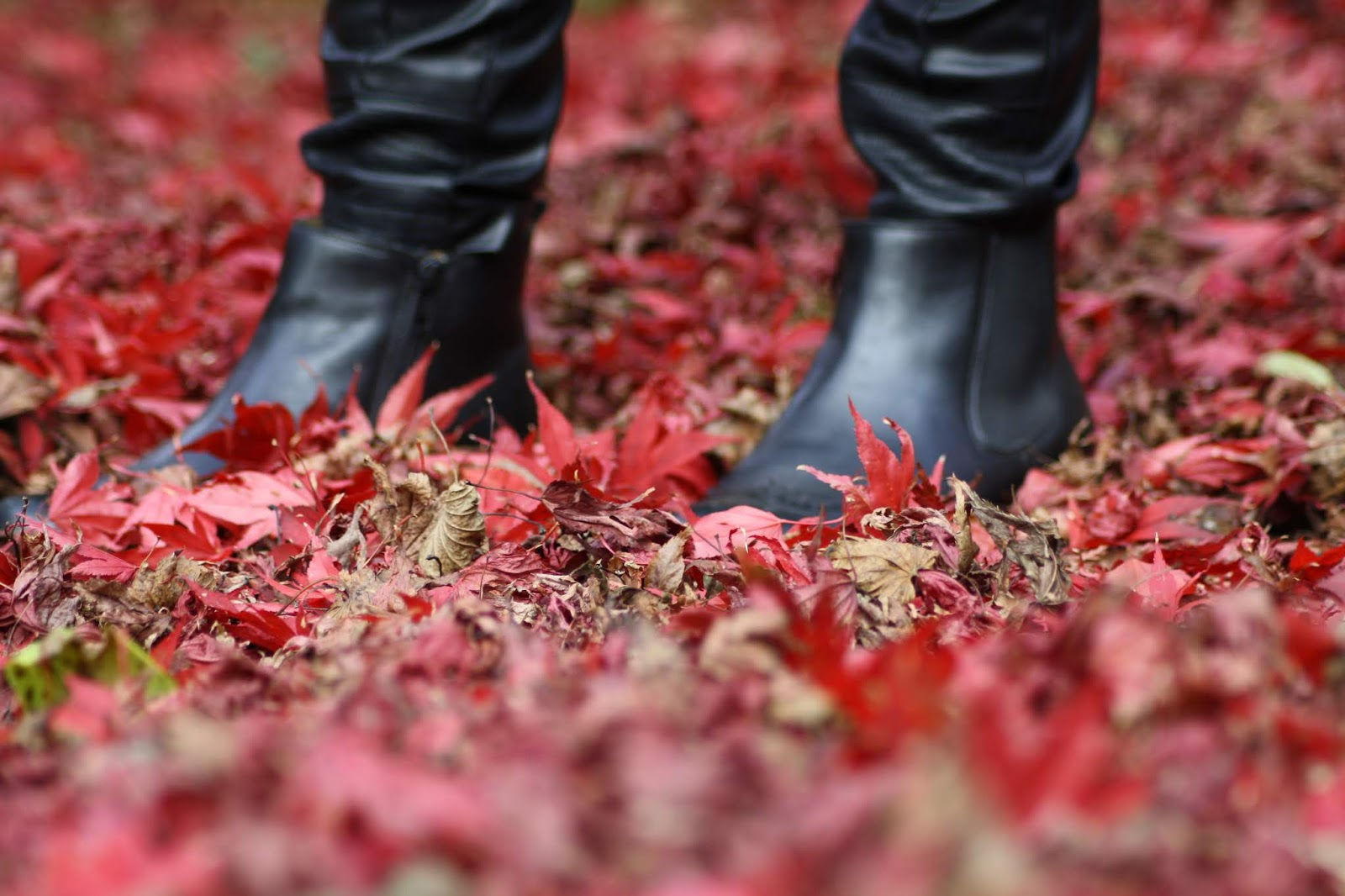 black leather boots and faux leather trousers hidden slightly behind red autumn leaves