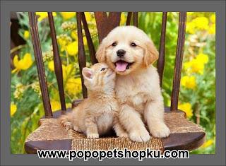 persahabatan anjing dengan kucing