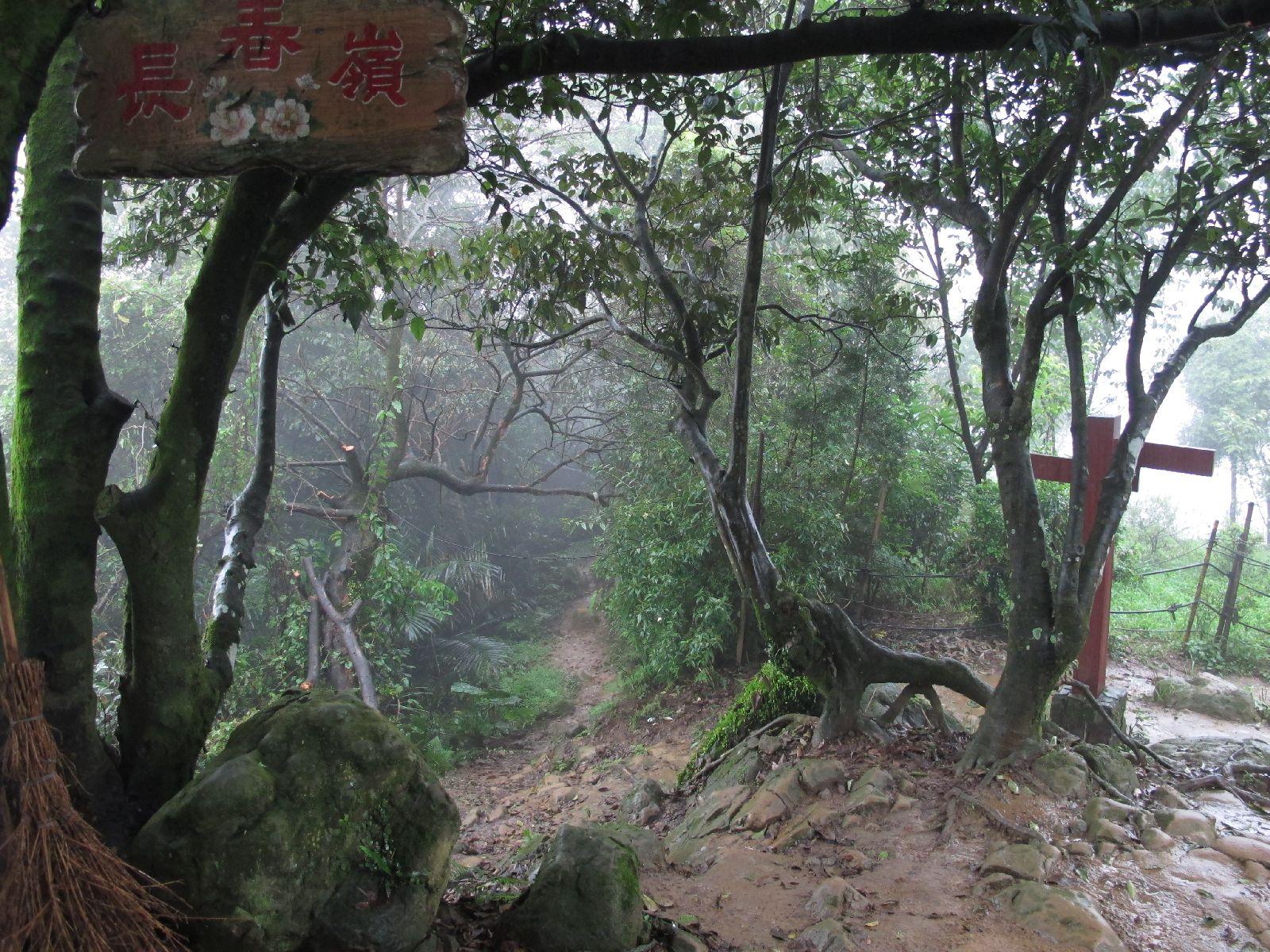 長春嶺のあずま屋で雨具を着ける 相思樹黄色の花絨毯の縦走路