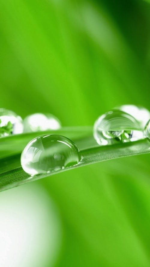 Iphone 5 Hq Wallpapers Water Drops On Green Grass Iphone 5