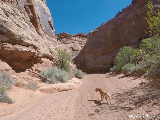 Hiking the Moonshine Wash Slot Canyon San Rafael Swell