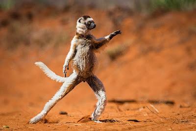 우명 실체 안녕하는 원숭이