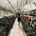 Instagrammable Belfast: Botanic Gardens.