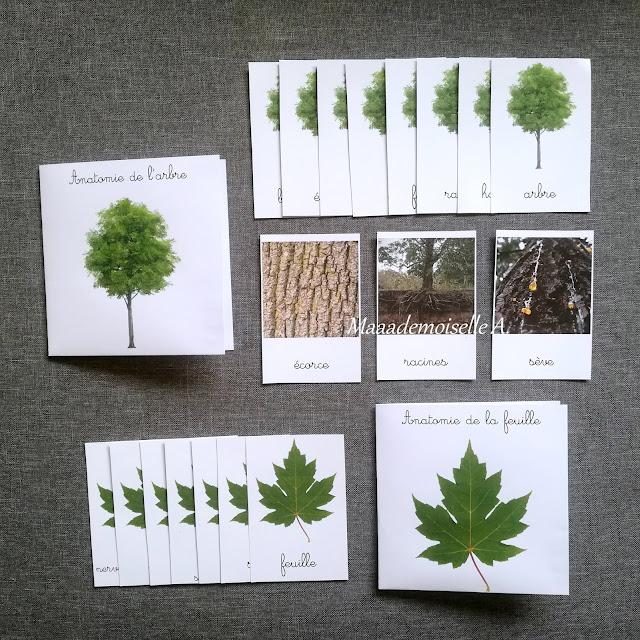 || Cartes de nomenclature : Anatomie de l'arbre et de la feuille